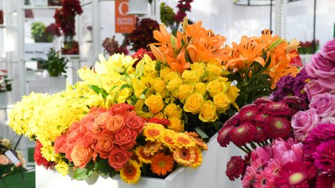 Floradecora: Fresh flowers at Christmasworld in Frankfurt
